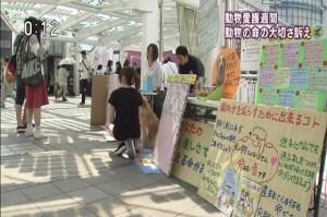 NHK 2015.09.20 動物愛護週間.mp4_000079047